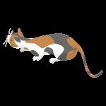 忍び足の猫